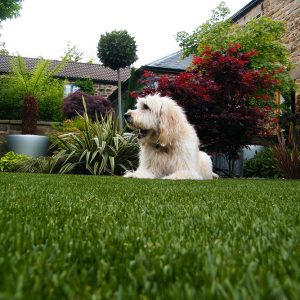 A dog looking very happy lying on fake grass.